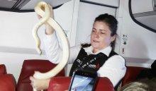 Американская стюардесса поймала змею всамолете