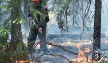 В профилактике и тушении лесных пожаров в Приангарье примут участие добровольцы
