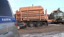 В Куйтунском районе задержана крупная группировка за незаконную вырубку 300  кубометров леса