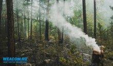 ВПриангарье 25апреля ликвидировано 19лесных пожаров