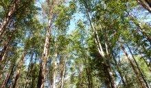Иркутская область продала Китаю  за три месяца лес на 273 миллиона долларов
