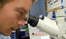 Палеонтологи представили вКитае птенца вянтаре возрастом 99млн лет