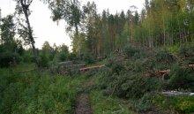 В Эхирит-Булагатском районе задержан мужчина за нелегальную вырубку леса на 130 тысяч рублей
