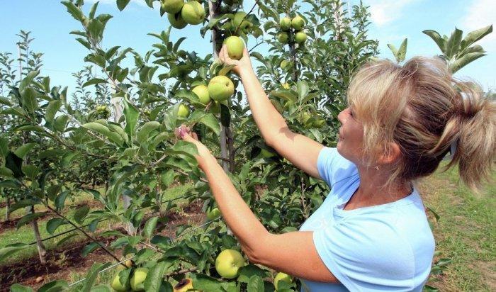 Студотряды Приангарья отправятся собирать фрукты в Крым