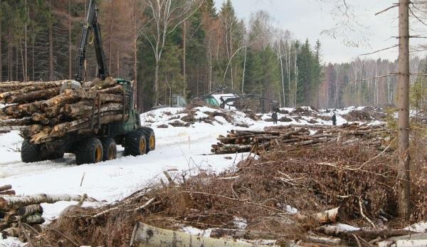 ВИркутской области задержана бригада «черных» лесорубов