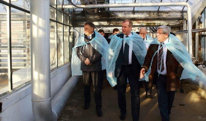 В Приангарье вернутся к модернизации и строительству тепличных комплексов