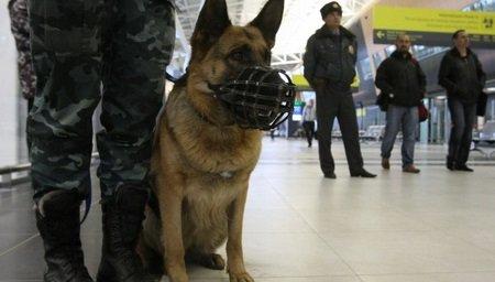 Неизвестные сообщили озаложенных бомбах ваэропортах Якутска, Южно-Сахалинска иМагана