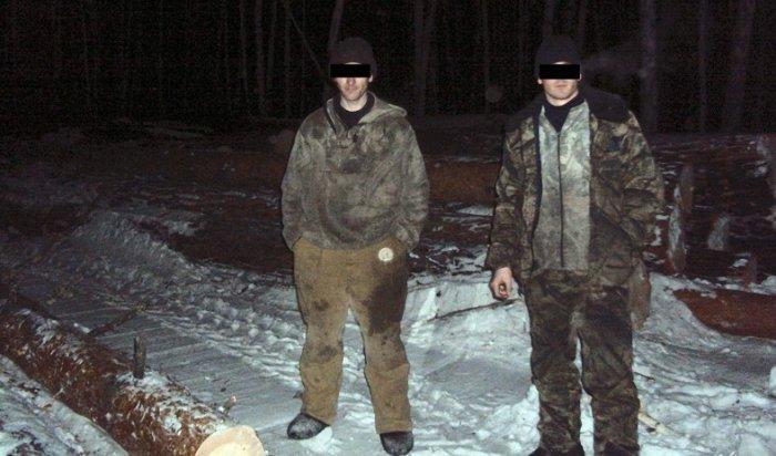 ВЗиминском районе задержаны «черные» лесорубы, причинившие ущерб на 300 тысяч рублей