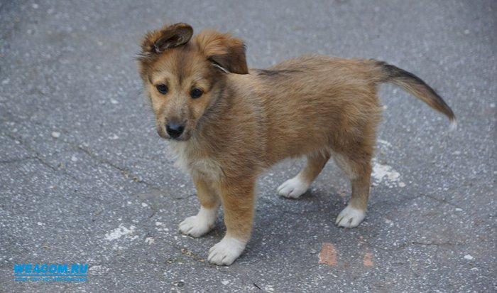В мониторинге бездомных животных будут участвовать зоозащитные организации Иркутской области
