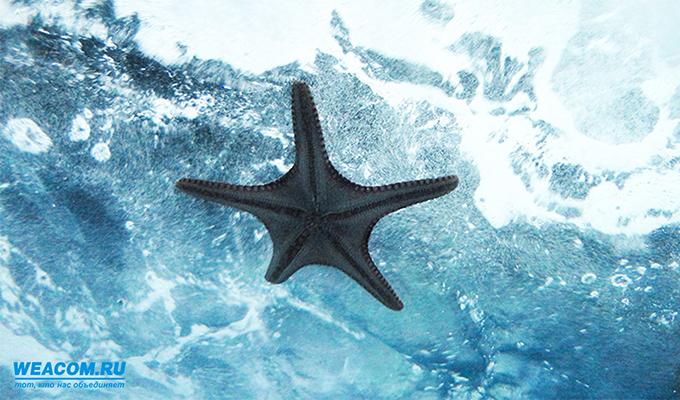 Иркутян приглашают на выставку «Тайны морских глубин»