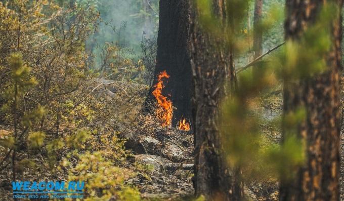 Четыре очага торфяных пожаров «пережили» зиму вИркутской области