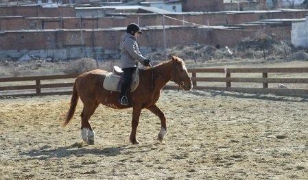 Городские власти планируют поддерживать развитие конного спорта в Иркутске