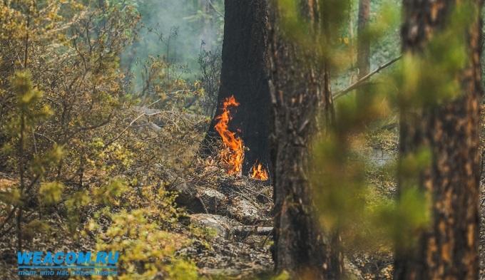 ВСибири ввели особый противопожарный режим