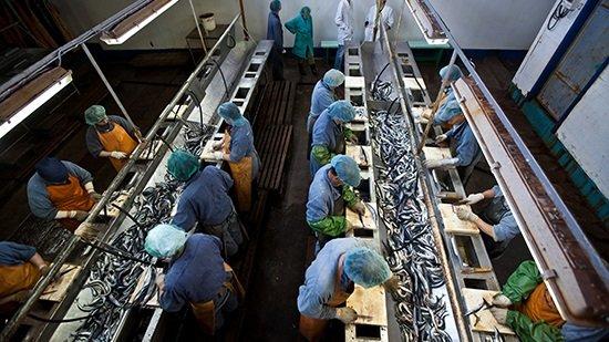 Учредитель рыбокомбината на Шикотане объявлен в международный розыск