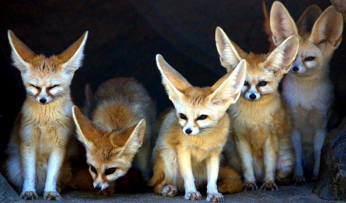 В Иркутске откроется выставка тропических животных «Экзотариум»