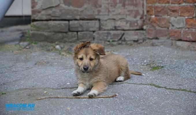 Вмосковском приюте для животных погибли около 300собак
