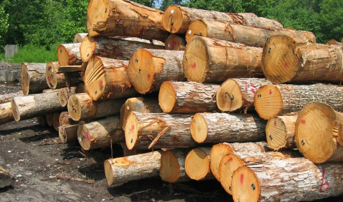 В Иркутской области впервые в России начнут чипировать заготавливаемую древесину