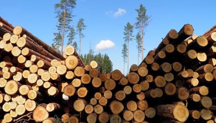 Глава поселения Тайшетского района задержан за организацию незаконной рубки леса