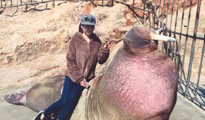 ВКитае морж утопил посетителя, делающего селфи