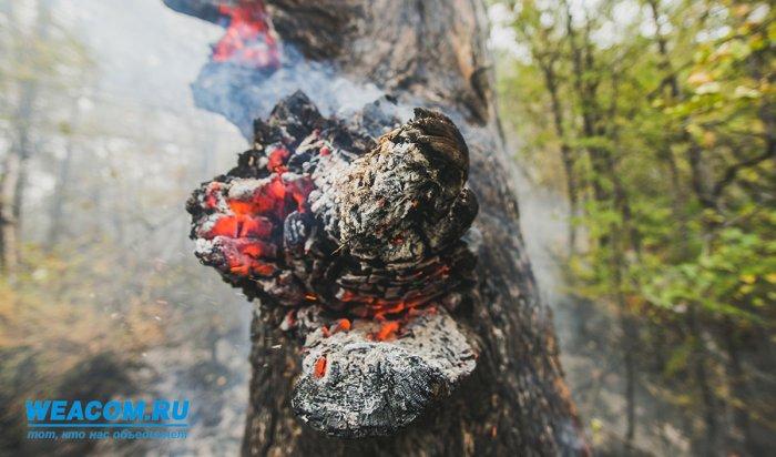 В двух районах Иркутской области зафиксирован наивысший класс пожароопасности