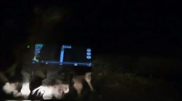 В Астраханской области стадо верблюдов затоптало ехавшую по дороге машину