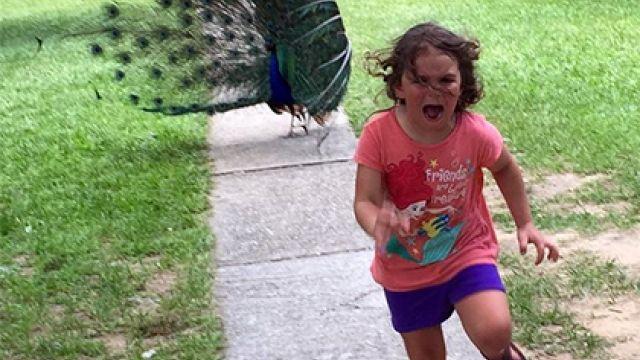 Девочка, испугавшаяся павлина взоопарке, стала героиней фотошоп-битвы