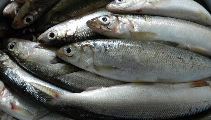 В посёлке Еланцы возбудили дело по факту незаконной ловли рыбы