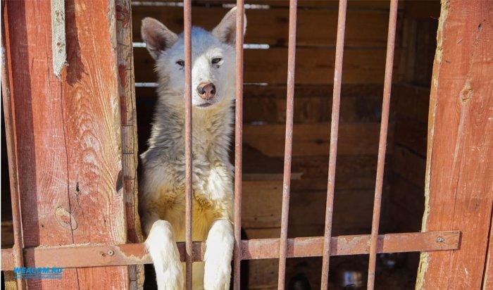 В Приангарье депутаты Заксобрания  внесли изменения в закон об отлове бездомных животных