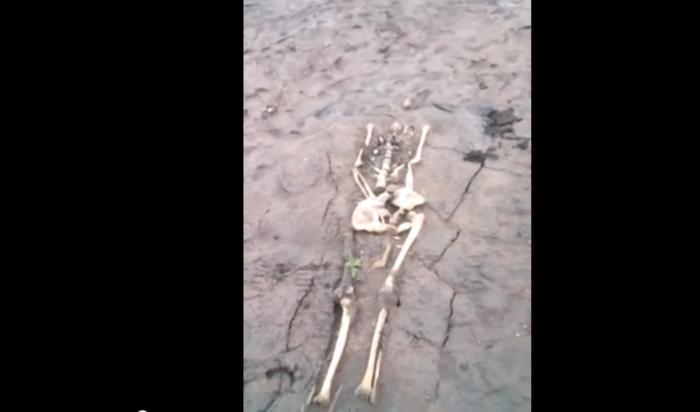 Старое кладбище соскелетами «всплыло» наБратском водохранилище