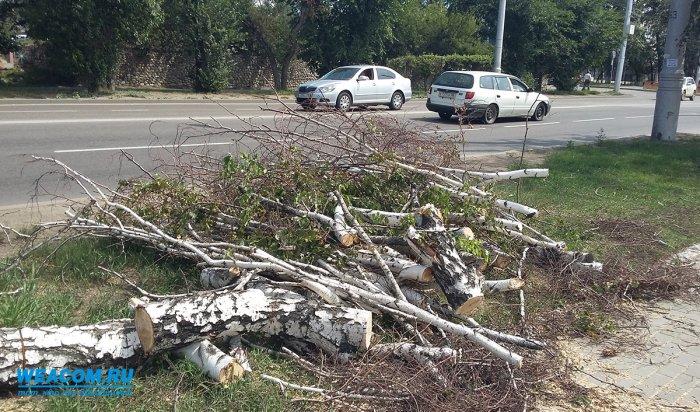Иркутяне могут подать заявку на снос сухих и аварийных деревьев