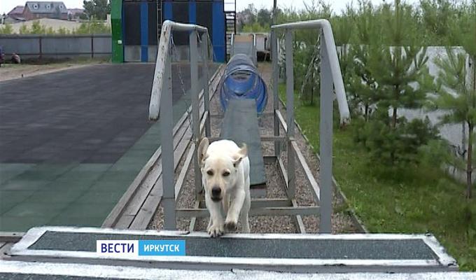 В Иркутской области скоро появится первая дипломированная собака-спасатель