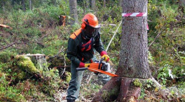 В Осинском районе задержаны трое жителей за незаконную рубку леса