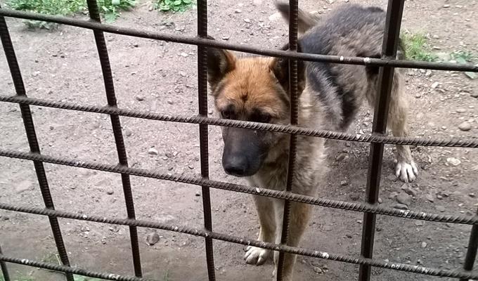 В Приангарье собаку, брошенную после ДТП хозяином, забрали полицейские