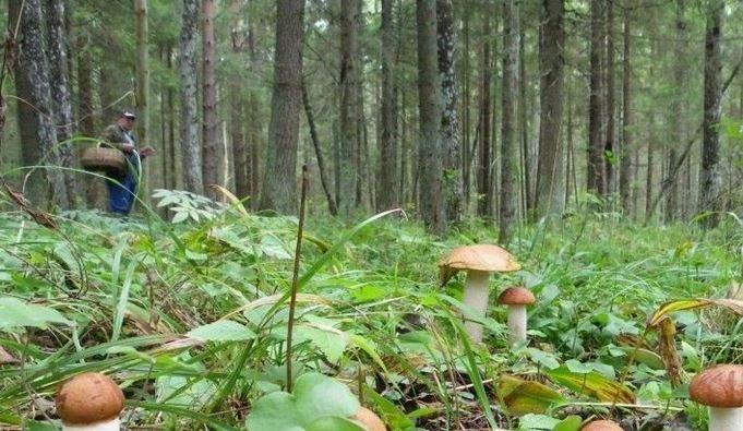 В Казачинско-Ленском районе найдены трое заблудившихся грибников