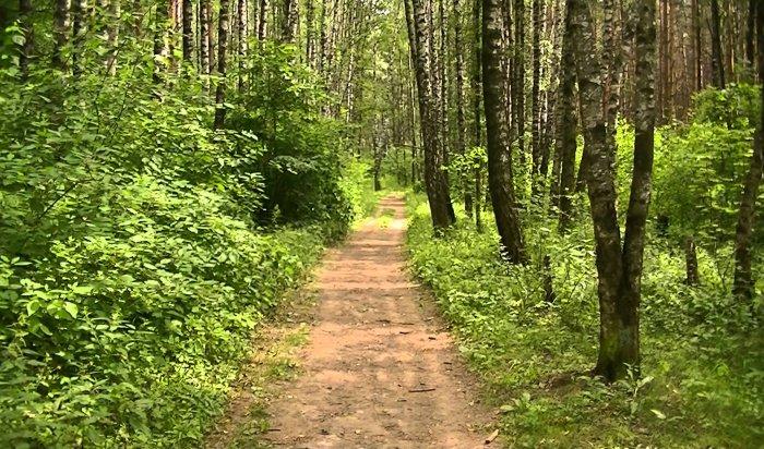 В Чунском районе обнаружены двое жителей, заблудившихся в лесу