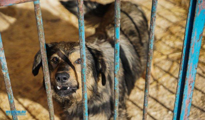 ВУсть-Илимске стая бродячих собак набросилась на девочку имужчину