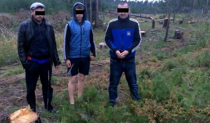 В Иркутской области задержаны трое мужчин, вырубивших лес на миллион рублей