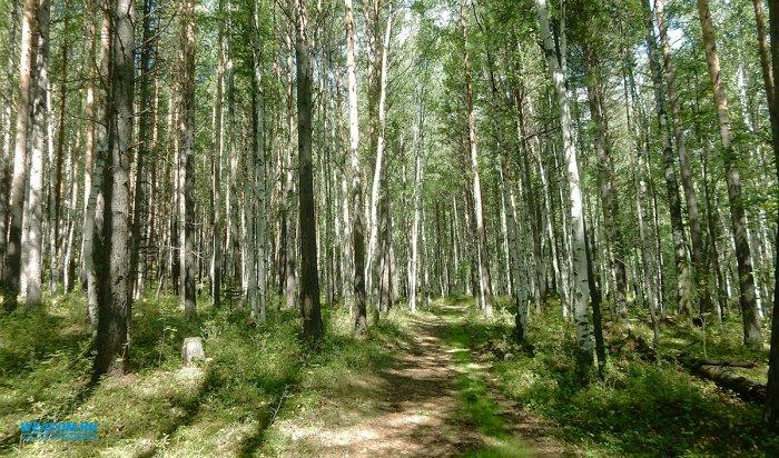 В Усть-Илимском районе грибник, испугавшийся медведя, провел в тайге почти 4 дня