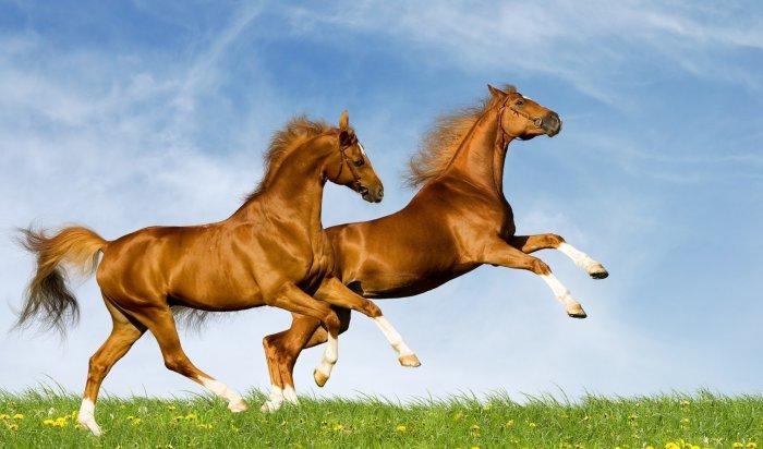 «День почитания лошади» пройдет в Иркутском районе 4 сентября