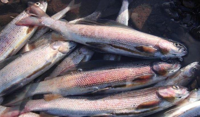 В Нижнеудинске осуждены двое жителей, ловивших рыбу при помощи электротока