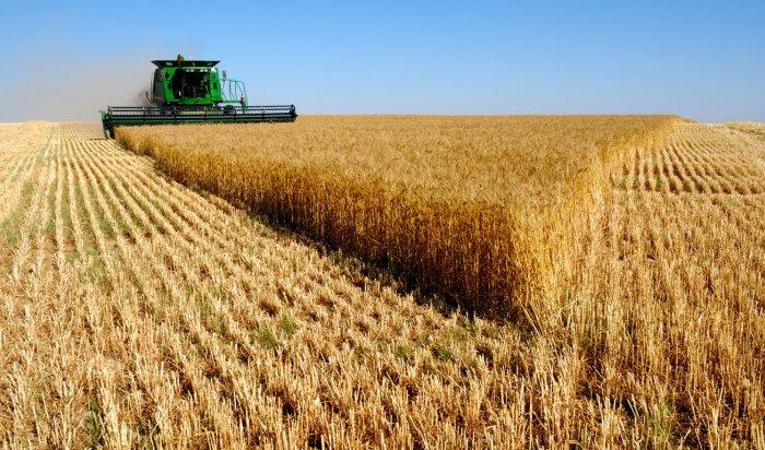 Аграрии Иркутской области убрали 30% зерновых культур