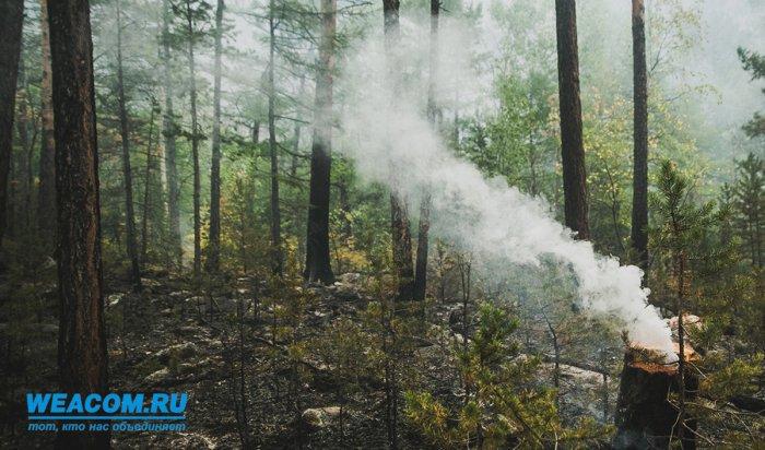 Наутро 12сентября вПриангарье действуют 8лесных пожаров