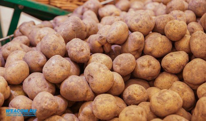 Россия снимет запрет напоставки изЕгипта всех овощей, кроме картофеля
