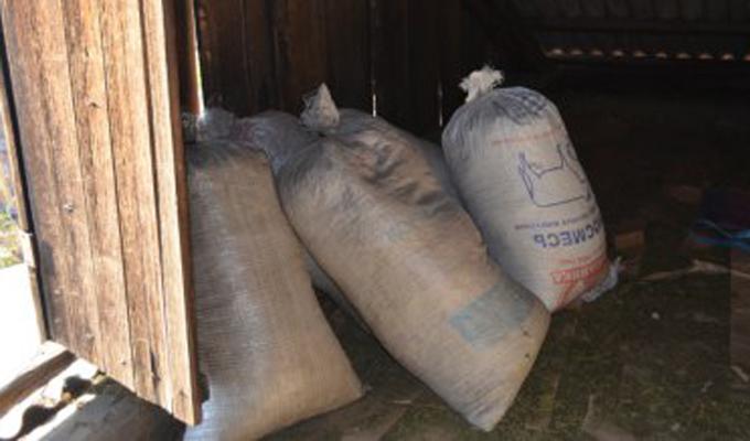 ВЗиме 18-летний житель заготовил почти 20мешков конопли, чтобы «пережить суровую зиму»