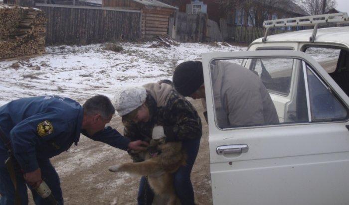 В Иркутской области пожарные спасли собаку, запутавшуюся в цепи