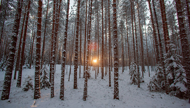 ВБашкирии школьники ходят через лес стопорами, чтобы отбиваться отволков