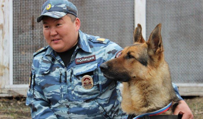 В Боханском районе служебная собака по кличке Чак помогла раскрыть кражу породистых кроликов
