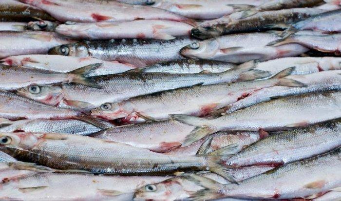 В Ольхонском районе возбудили дело по факту незаконной рыбной ловли