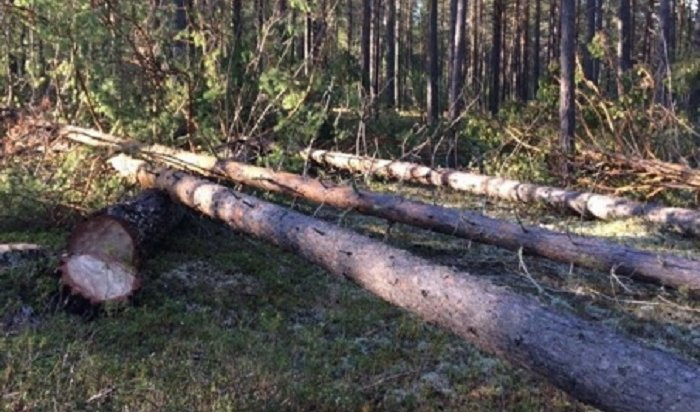 В Братском районе задержаны подозреваемые в нелегальной рубке леса на 6 миллионов рублей