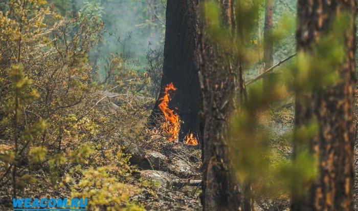 В Иркутской области расследуются шесть уголовных дел по факту пожаров